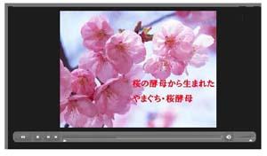 TV CFブログ