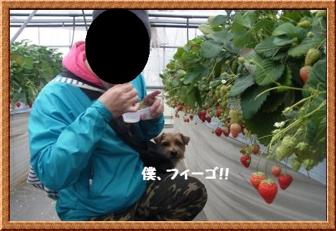 RIMG0939-1_20110405005428.jpg