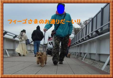 RIMG0979-1.jpg