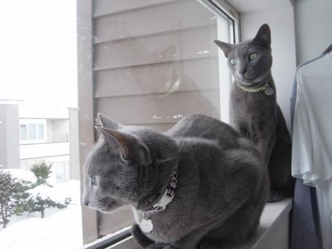 排雪を見る2