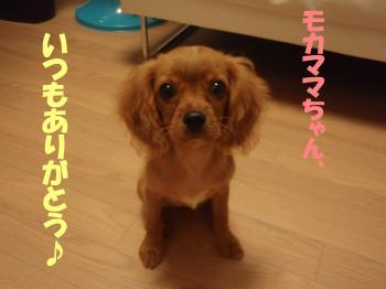 繝「繧ォ繝槭・_convert_20081026005128