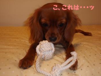 縺薙l縺ッ_convert_20081115192543