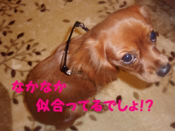 11・・6莨シ蜷医≧_convert_20081116091136