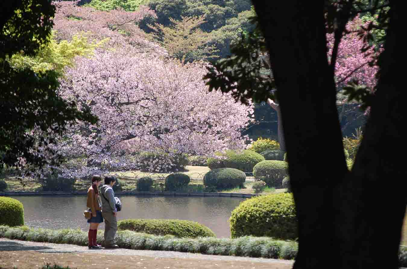 20110417新宿御苑「桜と二人」