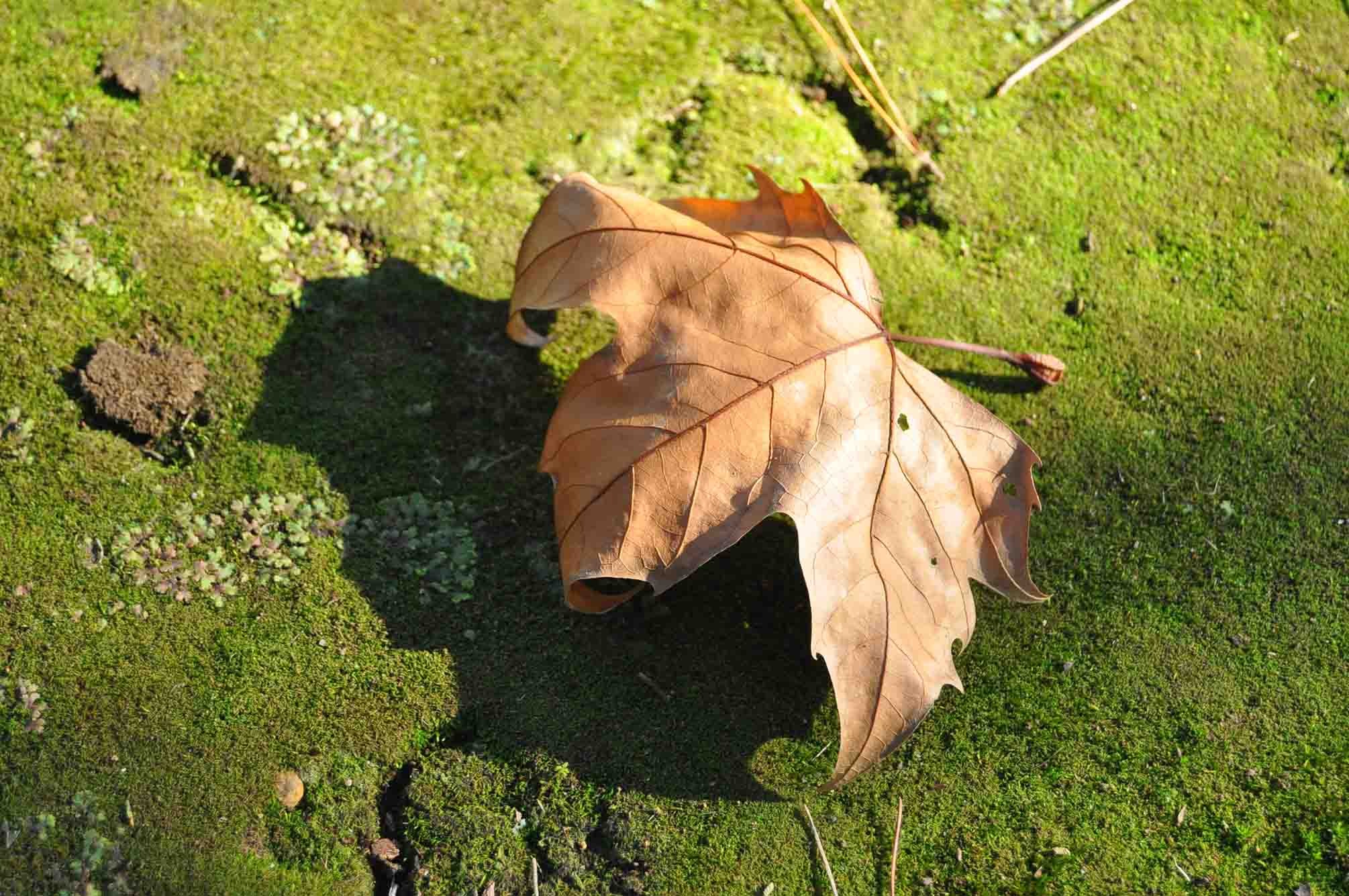 DSC_2252「影と落葉と」