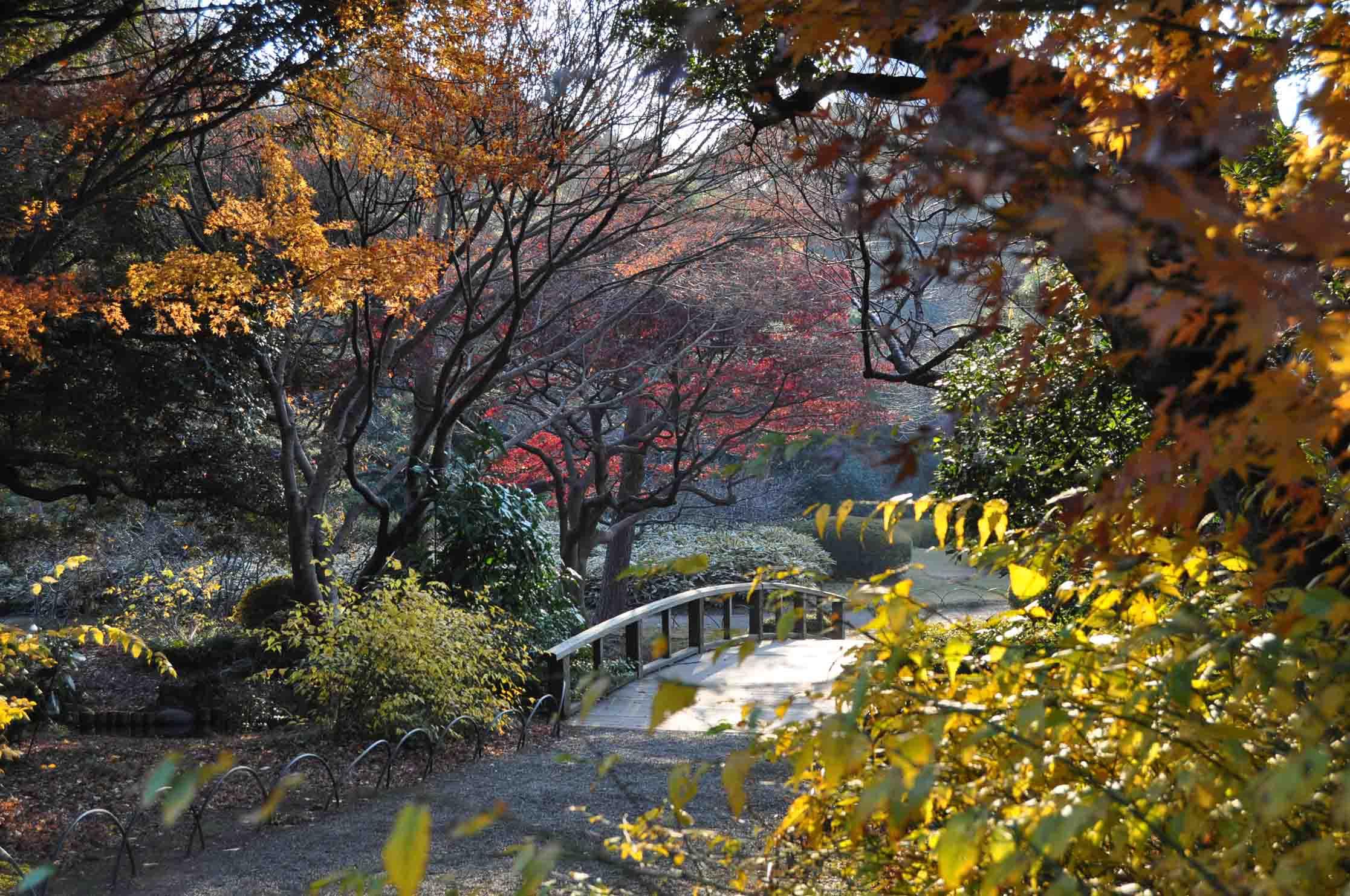DSC_2700A「橋を彩る紅葉たち」