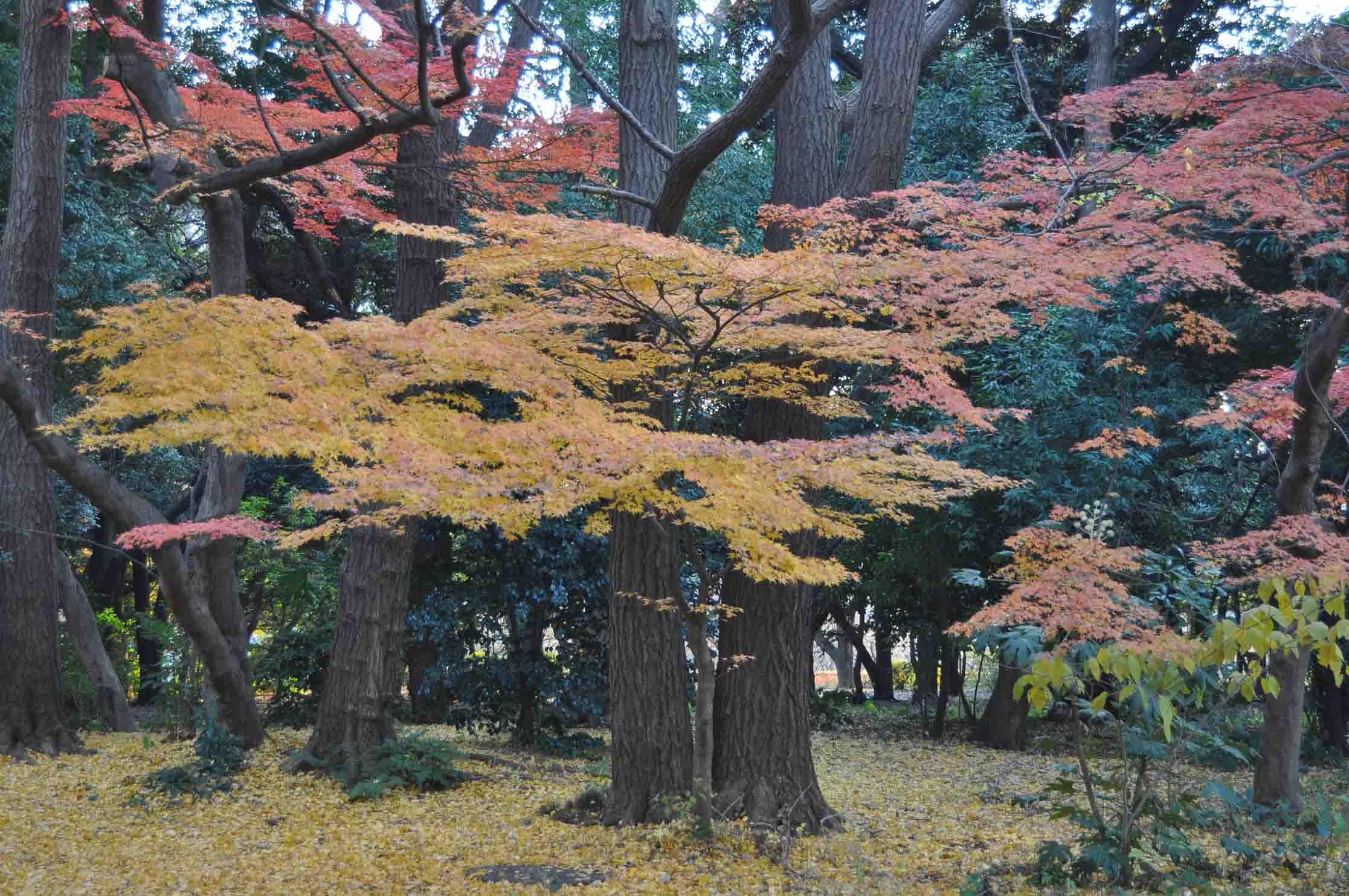 DSC_2745A「紅葉もよう」