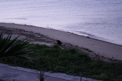 2009.01.12 沖縄旅行 020