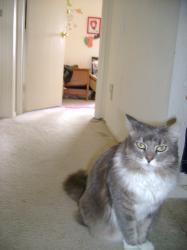 11-1-kitty.jpg