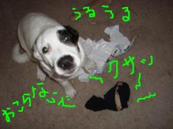 nana 2-4-socks