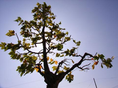 061017-Autumn