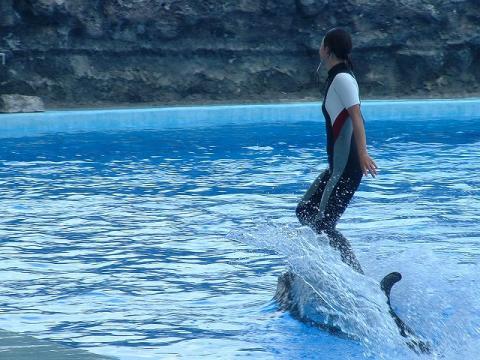 070317-Dolphin