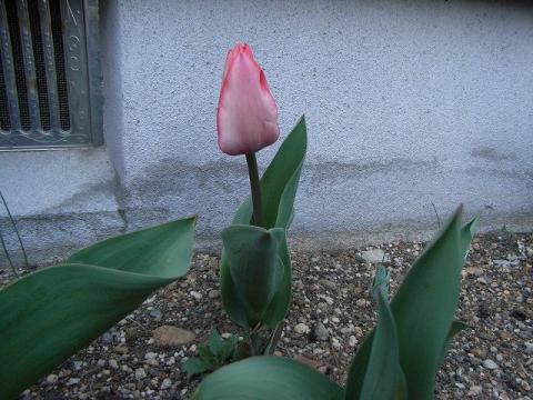 070321-Spring01