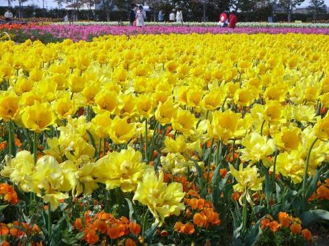 070421-Tulip