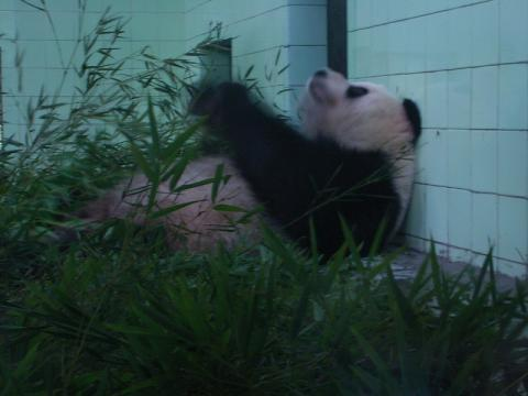 070620-Panda