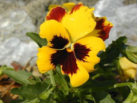 070623-flower01