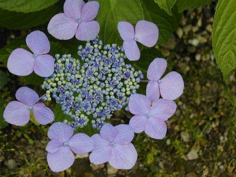 070623-flower02