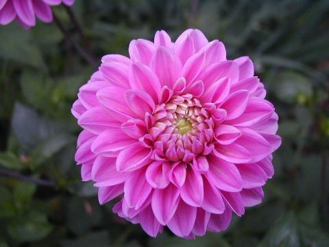 070623-flower03