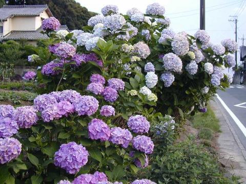 070624-flower02