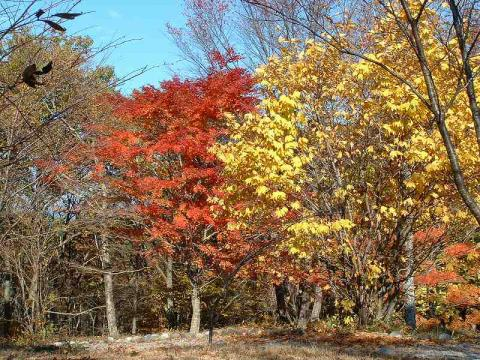 071109-Autumn-01