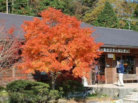 071109-Autumn-02