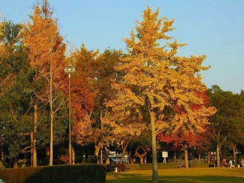 071113-Autumn
