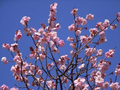 080315-Spring01
