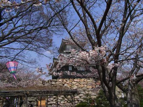 080326-Hamamatsu-Castle02