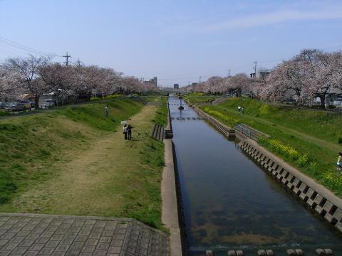 080402-Sakura02