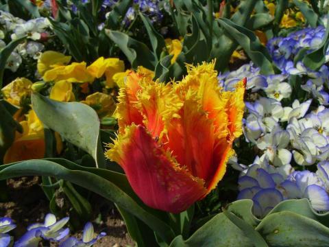 080407-Spring-03