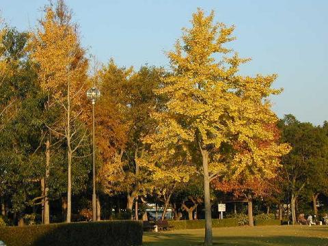 081031-Autumn