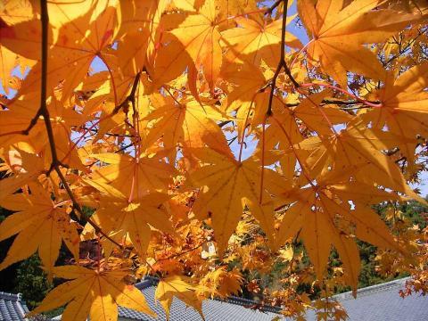081104-Autumn02