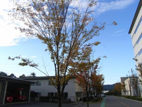 081112-Autumn