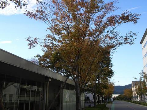 081113-Autumn