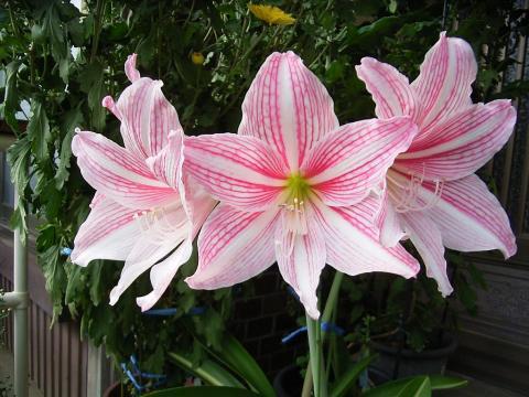061113-flower