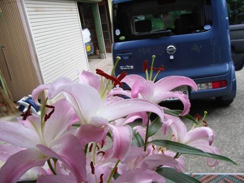 070710-flower & Car01