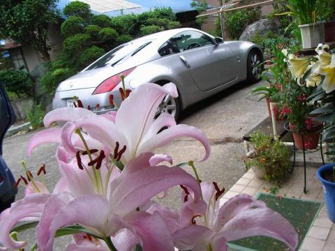 070710-flower & Car02