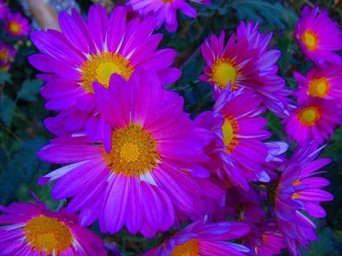 071101-flower-01