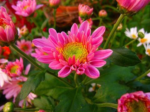071101-flower-02