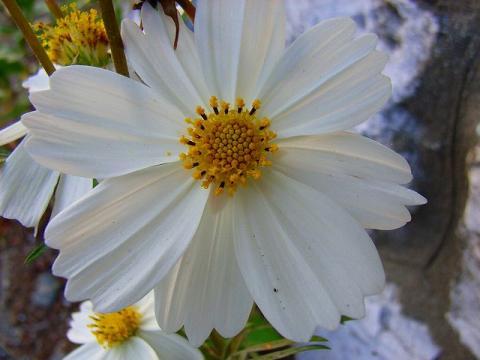 071101-flower-03