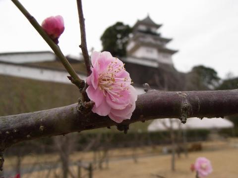 080309-Spring-01
