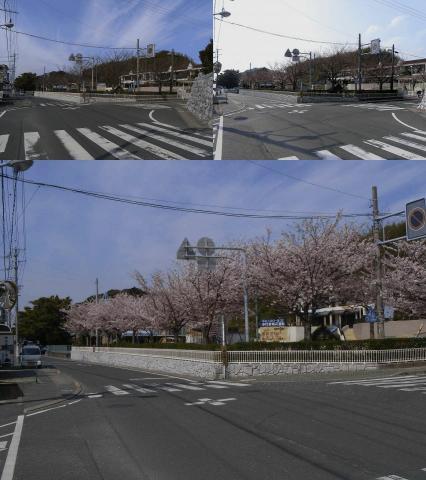 080405-Cherry blossom.jpg