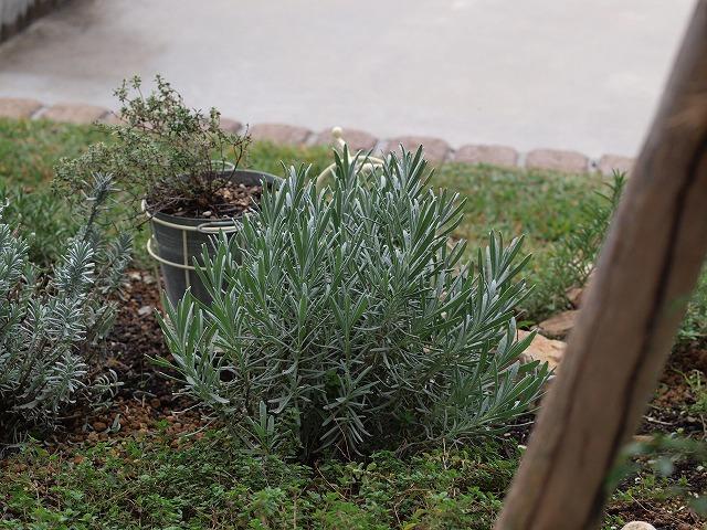 s-garden2008.11 134