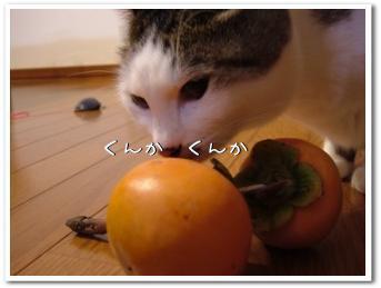 komikaki200811113.jpg