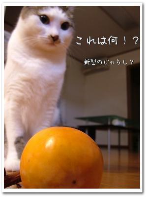 komikaki200811114.jpg