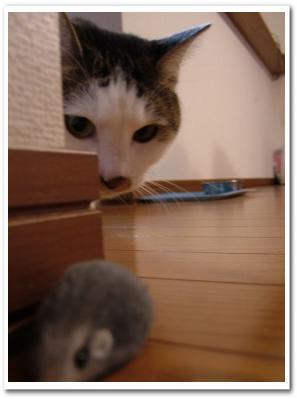 kominezu20081114.jpg
