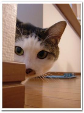 kominezu200811142.jpg