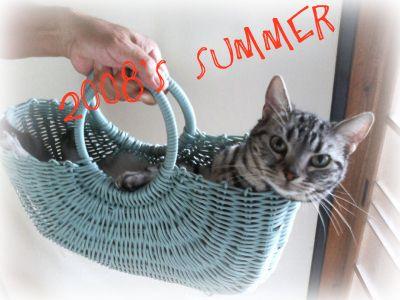 夏のカゴネコ