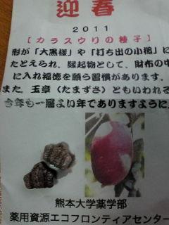 カラスウリお守り110213