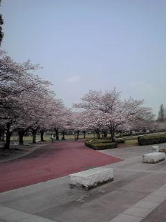 桜1110403